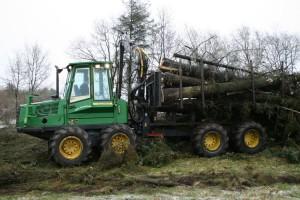 flisning-stort-træ2