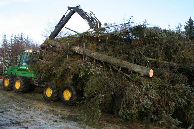 flisning-stort-træ3