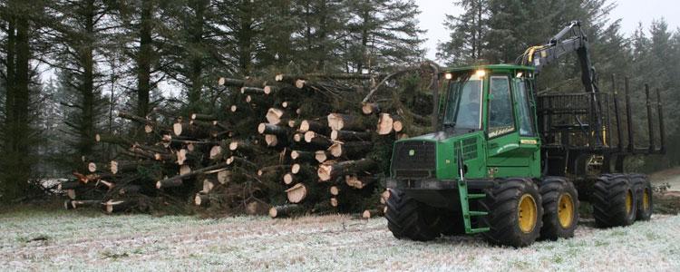 flisning-stort-træ4
