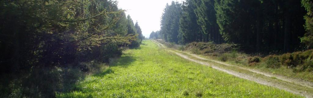 græsmark-i-skoven